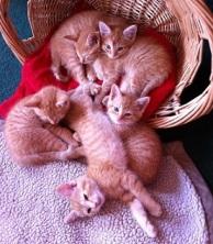 Mary Kittens